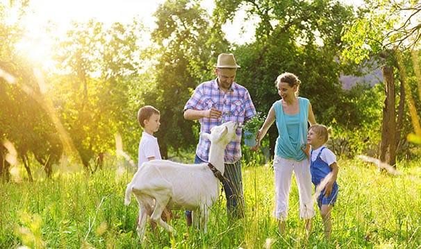 Urlaub am Bauernhof in Flachau - Bauernhof Gindlgut